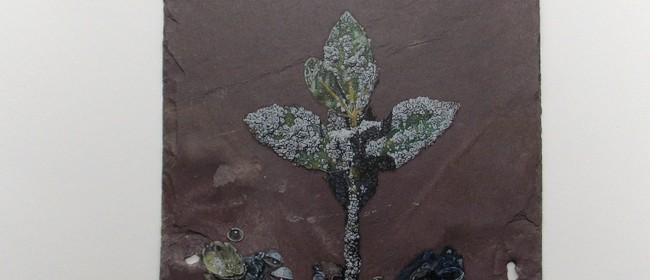 The Seashell Flesh: Craig Humberstone