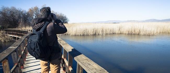 Bird Watching for Beginners: POSTPONED
