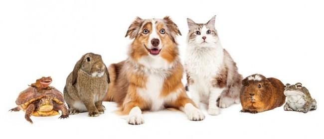 Pawfect Pets