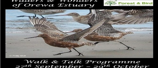 Waders & Wonders of Orewa Estuary - Walk & Talk Series