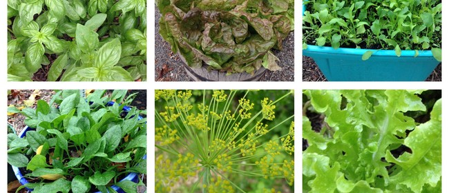Sow Your Summer Salad Leaves and Herbs
