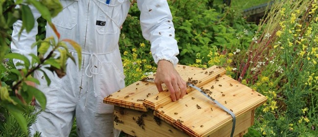 Gardening for Bees