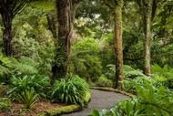 Guided Walk: Kaiwharawhara Valley Revegetation