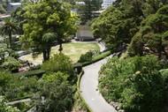 Guided Walk: Midsummer Botanical Ramble