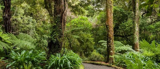 Guided Walk: The Native Podocarp Grove