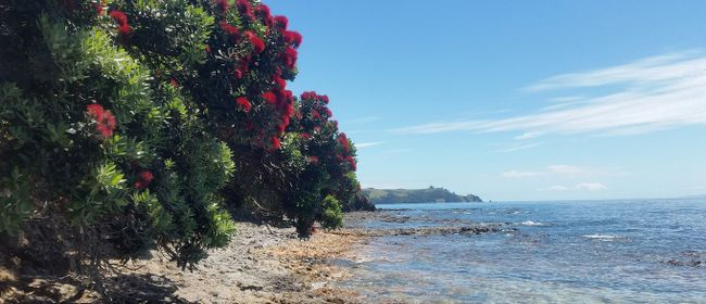 Native Plant Biodiversity: A Botanical Look At Rotoroa Islan