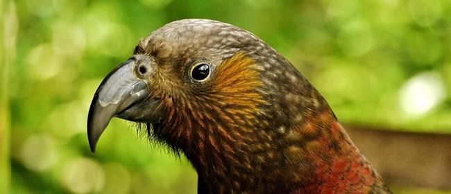 Ailene's Arvos - Bird Feeders and Wind Spirals