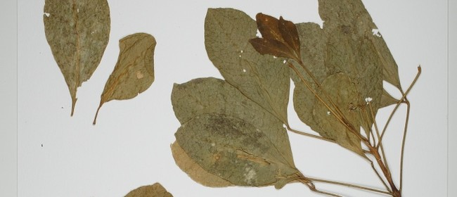 FESTA 2018: Edible Plants - Tour of The Allan Herbarium