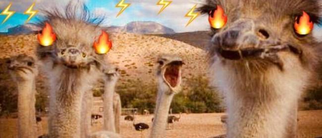 Hot Ostrich