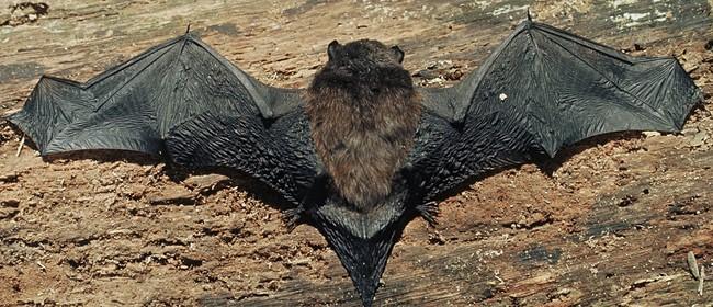 Bat Tour