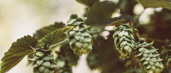 Hops From Garden to Glass