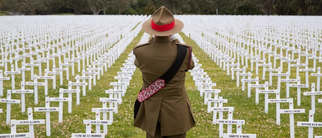 Lone Bugler at Armistice Field of Remembrance