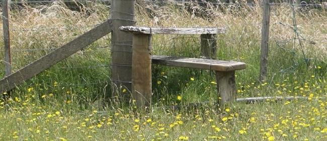 Summer Meditation Retreat