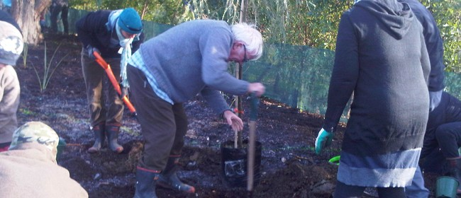 Armistice Day 100 Year Commemoration - Tree Planting