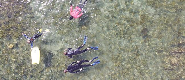Explore Whitireia Coast Snorkel