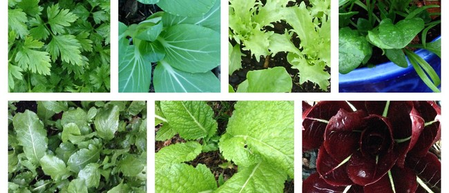 Sow Your Autumn Salad and Herbs
