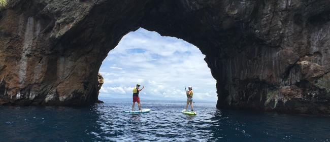 Poor Knights Islands Paddle Boarding Tour