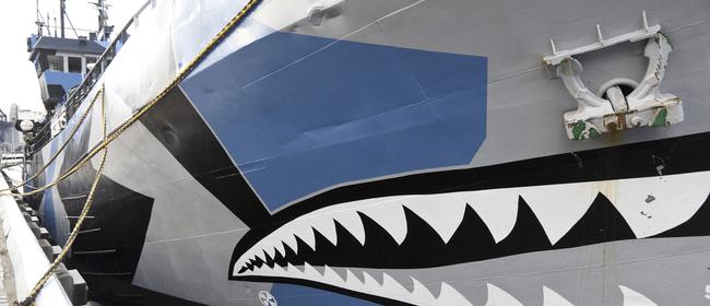 SeaWeek: Defend, Conserve, Protect with Sea Shepherd NZ
