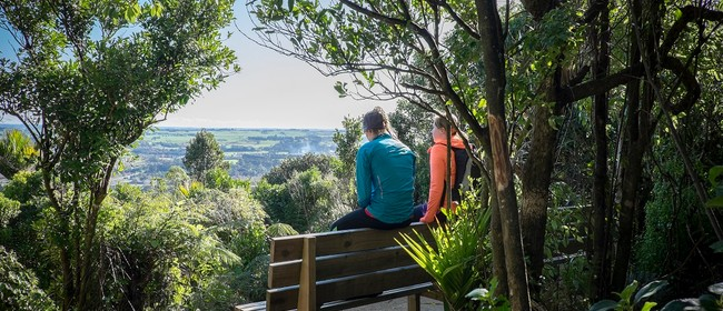 The Tawa Loop Walk – Te Apiti – Manawatu Gorge