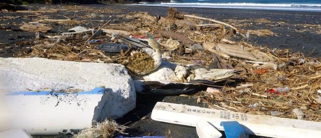 Seaweek - Catholic Parish of Napier Beach Clean