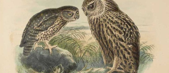 Buller's Birds - The Art of Keulemans and Buchanan