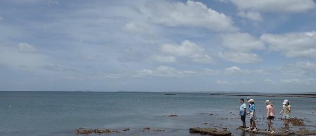 Seaweek – Marine Life Underfoot