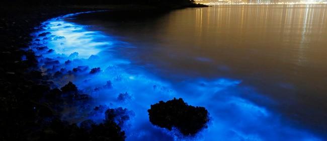 Seaweek - Glowing Oceans
