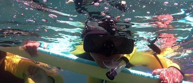 Seaweek - Learn to Snorkel and Marine Survey