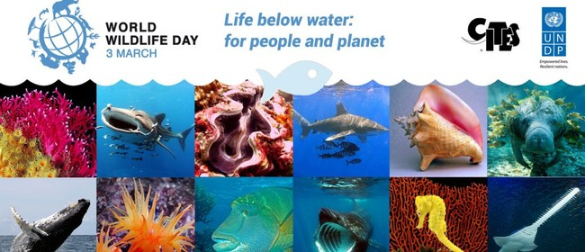 Seaweek - UN World Wildlife Day 2019