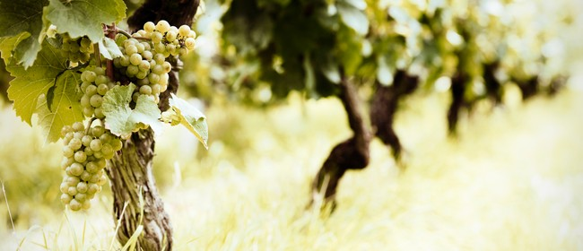 Wine Exploration: Classical Aromatic White Wines