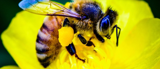 Introductory Course to Urban Beekeeping