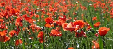 ANZAC Day Service - Renwick