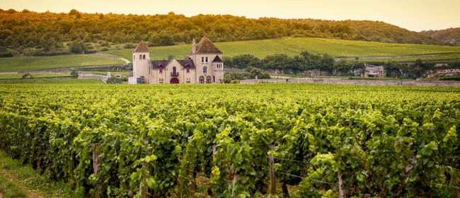 Burgundy Wine Tasting - Cote d'Or at it's best.: SOLD OUT