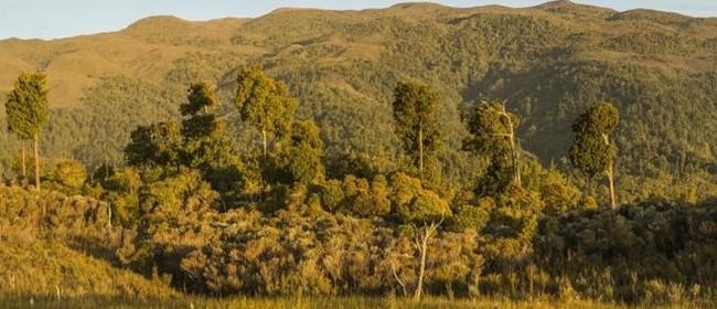Forest & Bird Wellington's Wild Wednesday - Restoring Nature