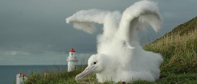 Special Albatross Express Tours for Wild Dunedin Festival