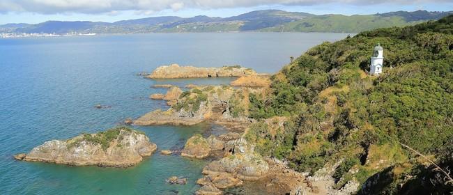 Archaeology Trip to Matiu Somes Island