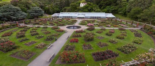 Botanic Gardens Day Walk: The Lady Norwood Rose Garden