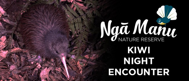 Kiwi Night Encounter