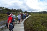 Okiato to Orongo Bay - Walk 1