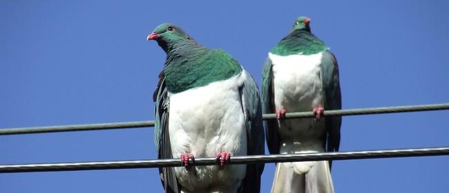 NZ Native Birds Storytime