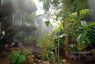 World Rainforest Show