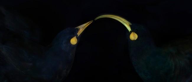 Taku toi kahurangi - My Precious Jewel, Fiona Pardington