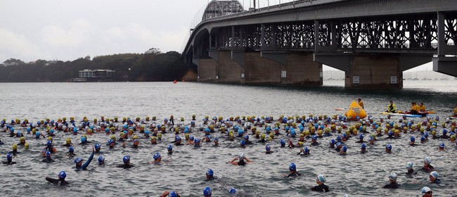 Harcourts Cooper & Co Swim the Bridge