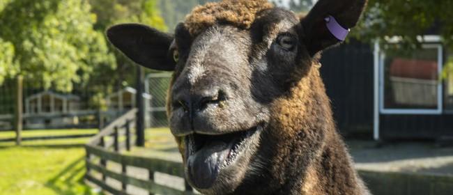 Sheepworld July Special
