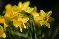 Marlborough Horticultural Society Spring Show