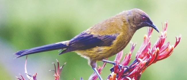 NZ Biodiversity Strategy - Dunedin Workshop
