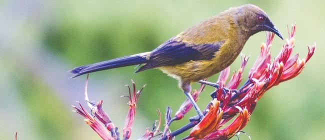 NZ Biodiversity Strategy - Auckland Workshop