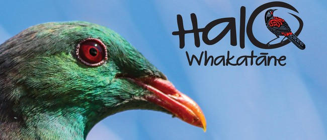 Halo Whakatane Kid's Photography Competition