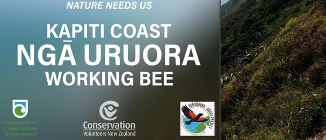 Conservation Volunteers New Zealand