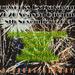 Adlam Painters Ltd Fireworks Spectacular